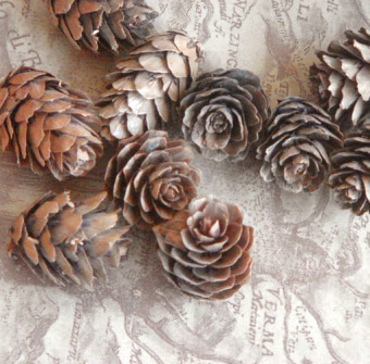 Retro pine cones natural dried fruit dried flowers