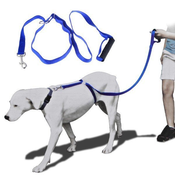 Instant Trainer Leash For Small Dogs