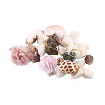 100g Mixed SeaShells Mix Sea Shells Shell Craft SeaShells AquariumDecor - intl