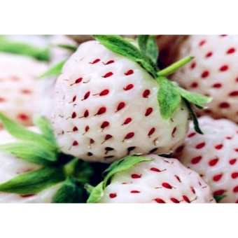 40pcs Cream Strawberry Fruit Seeds Home Garden Plant - intl