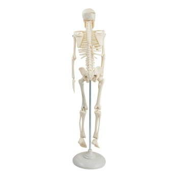 45cm Human Skeleton Anatomical Model Life Medical Poster Bonnet+Stand Flexible Anatomy Teaching Tool - intl