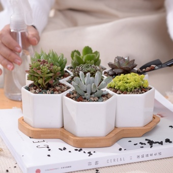 7+1 pcs/set Decorative Geometry Hexagon White Ceramic SucculentPlant Pot Porcelain Flower Pot Zakka Home Decor(7 pots+1 tray) -intl - 3