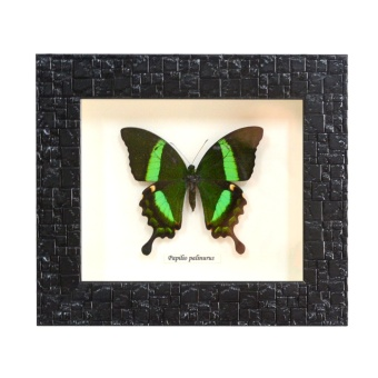 Butterfly Desk Frame Philippine Souvenir Home Decor