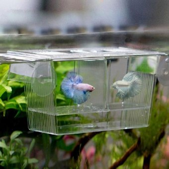 Fashion Aquarium Fish Tank Fish Breeding Box - intl