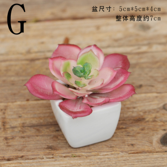 Garden model succulent plants mini small pot plant decorative Ornaments