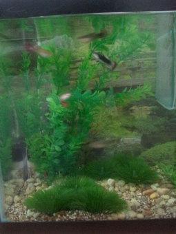 louiwill Plastic Decoration Simulated Sea Plants Flora for Aquarium Fish Tank (Green) (Intl) - picture 2