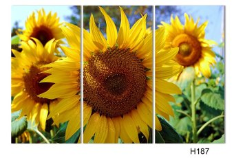 Luxry 3 Panel Modern Painting Home Decorative Art Picture Paint onCanvas Prints painting sunflower The field (No frame) - 2