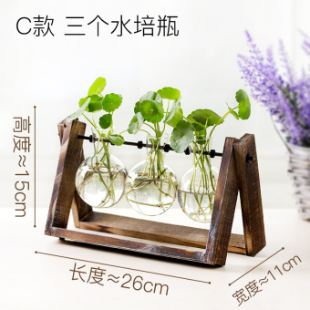 Modern hydroponic green radish plants transparent glass vase