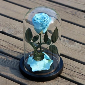 Rose Flower Festive Preserved Forever Immortal Fresh Immortalized Glass Cover Unique Love Gifts Home Decor( Sky Blue) - intl