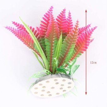 S & F Succulents Christmas Flower Plants - Intl - picture 2