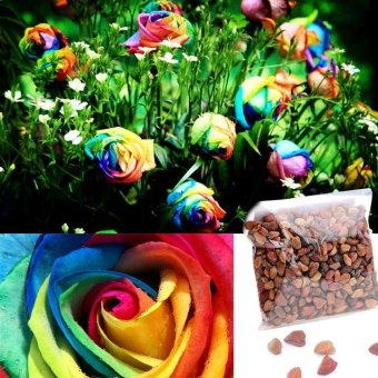 WONDERSHOP Perennials Beautiful Flowering Roses 500 Pcs Rose SeedsColors - intl