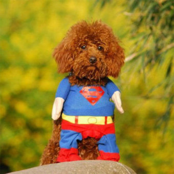 Fashion Pet Cat Puppy Clothes Costumes T Shirt Superman Suit withCloak