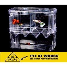 pet fish tanks